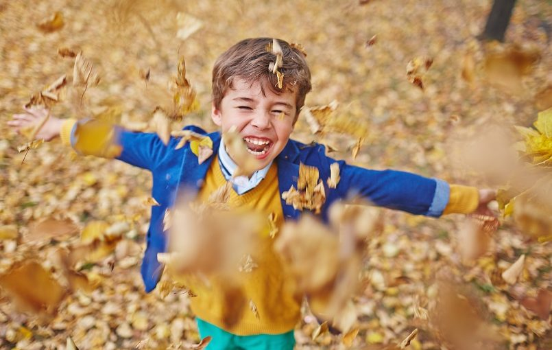 Fall Clean Up – 4 Things to Do to Keep Your Lawn Healthy