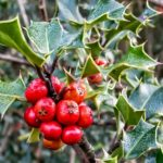 The Best Winter Plants for Your Landscape Design – Part 1